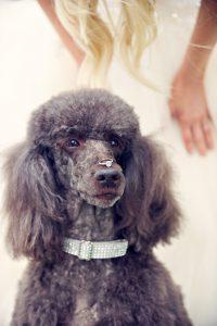 kate-hopewell-smith-fine-art-wedding-photography-Sony-ambassador-8